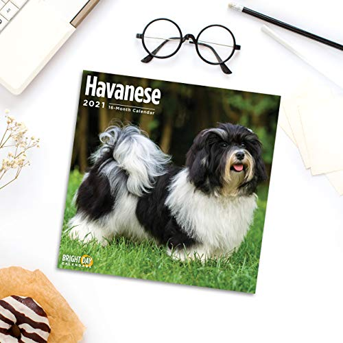 2021 Havanese Wall Calendar by Bright Day, 12 x 12 Inch, Cute Dog Puppy