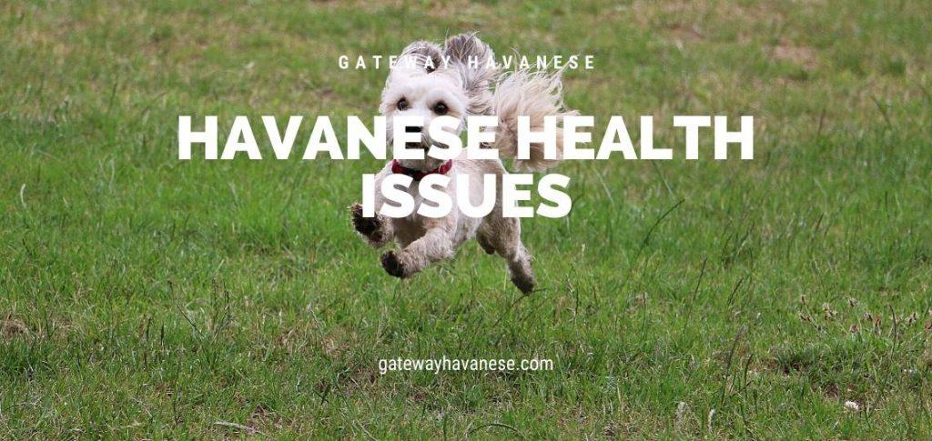 havanese health issues