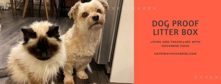 Dog Proof Litter Box