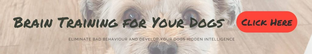 Brain training for dogs banner