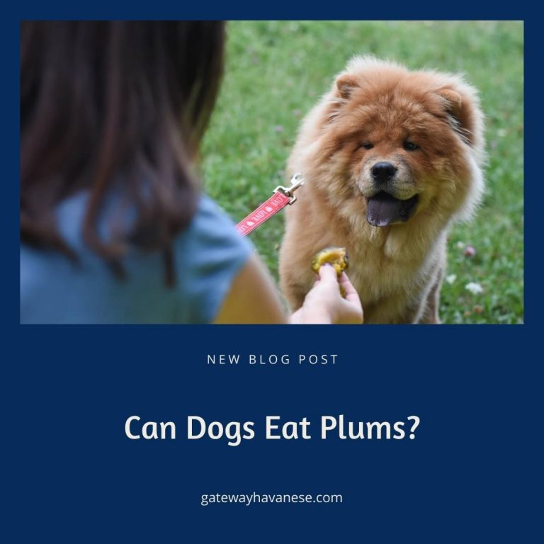 Plums and dogs and eating (1)