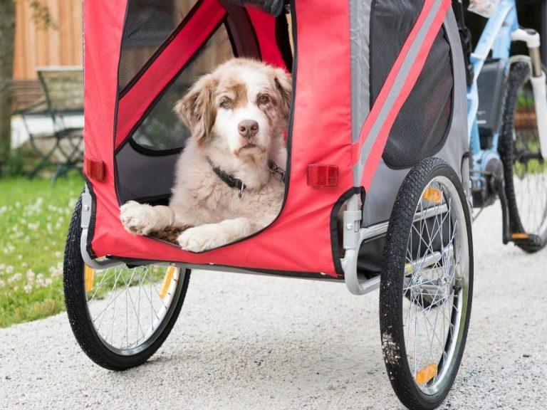 best bike dog trailers