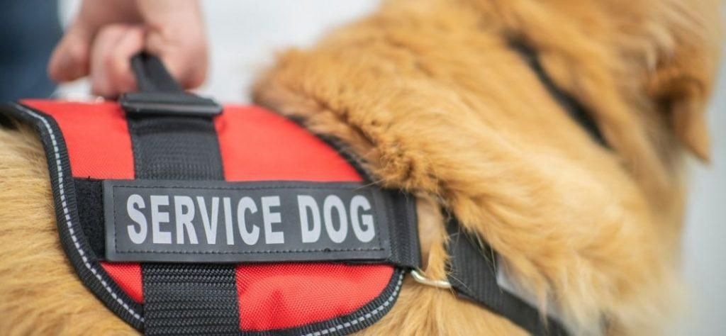 ESA Travel Service dog