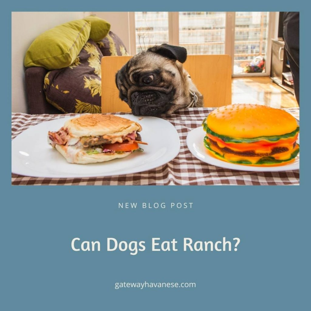 can dogs eat ranch