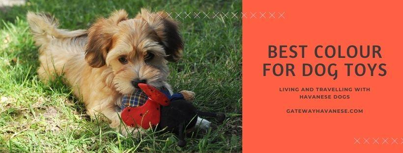 Best color for dog toys