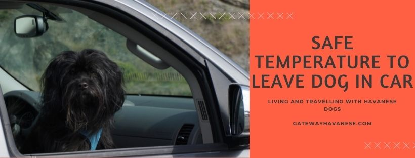 Safe Temperature to Leave Dog in Car