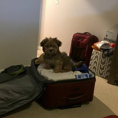 nessie dog in a suitcase not getting hair on the clothes.