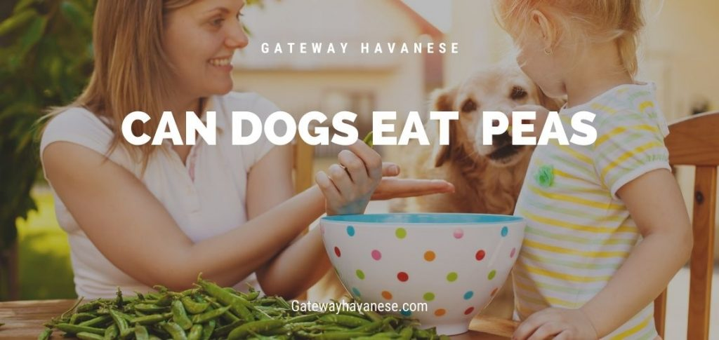 Woman and Girl giving a pea to a yellow lab dog